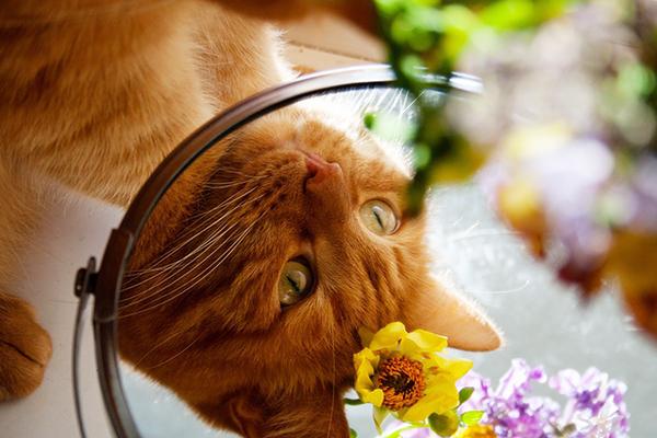結果は自分の行動が映る鏡