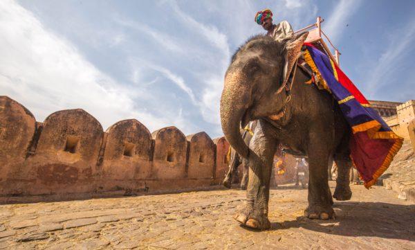 インド 象のタクシー