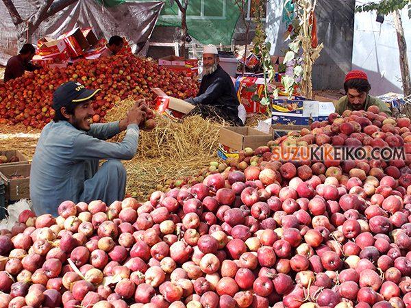 リンゴを詰めるフンザにいるパシュトゥン人