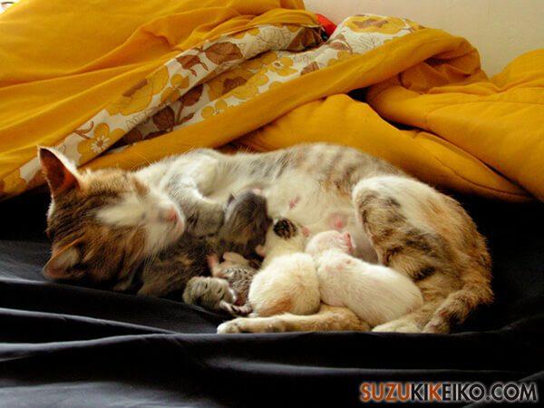 ドミトリーのベッドで子猫が生まれた