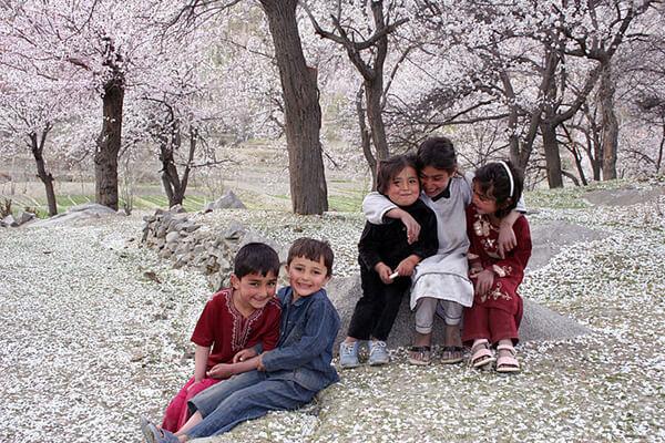 杏の花とフンザの子供