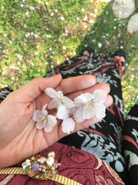 桜の花をひろう