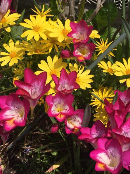 カラフルな近所の花壇