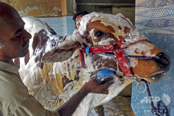 洗車場に動物が続々「来店」、イスラム教の犠牲祭控え パキスタン
