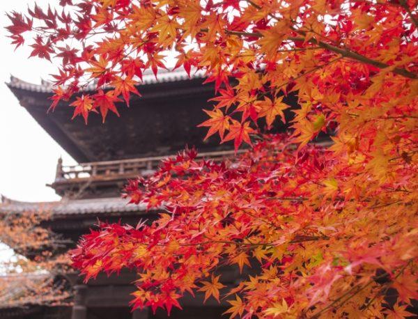 外国人のいない京都の秋を